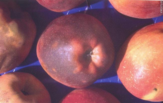 Escaldado Senescencia manzana pera