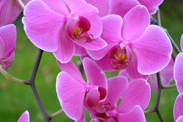 Usando Tele Flora para comprar y enviar flores