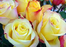 Compra y envía flores a México con Envía Flores