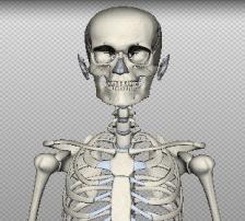 Atlas de anatomia em 3D online e gratuito