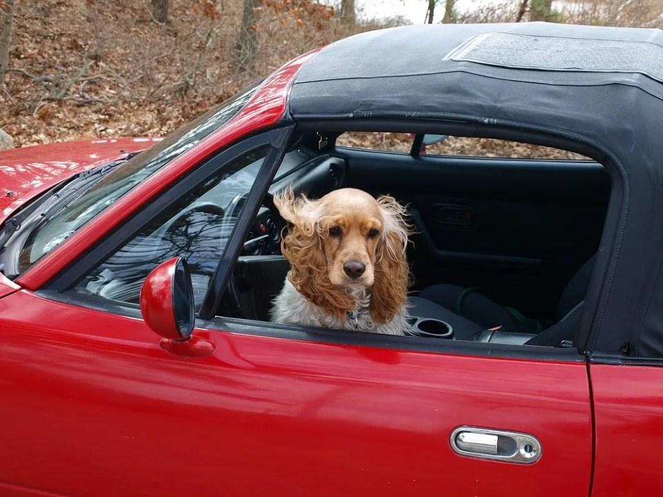 Bajar la temperatura interior del coche