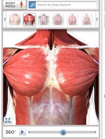 Mapa del cuerpo humano en 3D- Ciencia, PDI