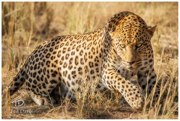 In Grass Etosha Np Namibia Ted Davis