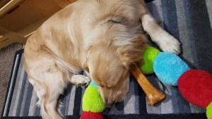 Teddy lying semi-curled up on stripey rug, with his head on a multicoloured cuddly caterpillar toy, which is approx 1 metre long, iwth round body sections in red, sky blue and lime green. Also lying beside his head is a reddish brown coloured smoky shank bone