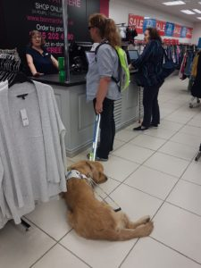 Teddy lying down, in harness, on white tiled floor, by the checkout in Bon Marche, while Ma is talking with the assistant lady