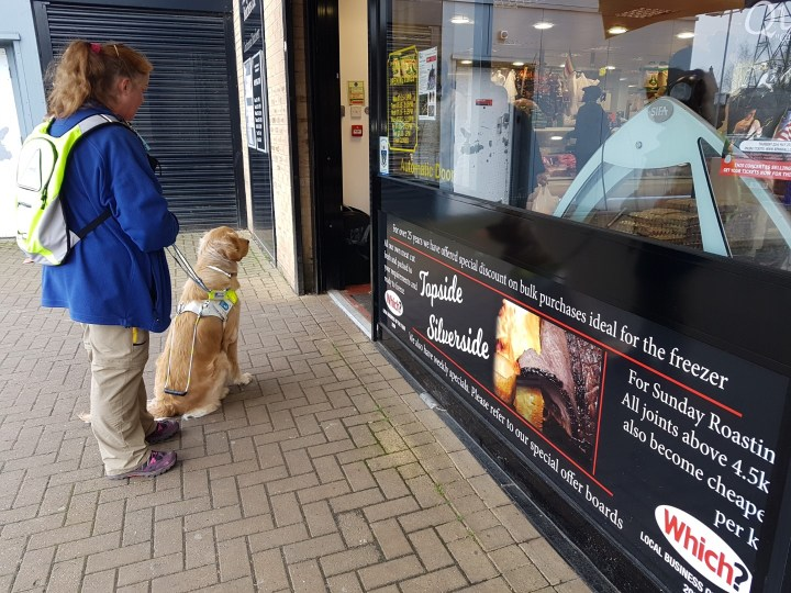 Ma with Teddy outside a butcher's shop. Teddy is in a sit postion, in harness, looking longingly inside at the door