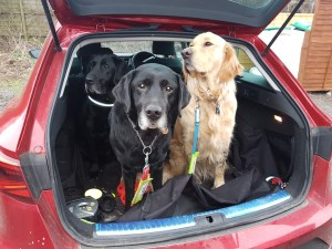 L to R Oakley (sitting looking to his left) Dixon (standing forward looking intently at camera) & Teddy (sitting looking to his left) all in the boot of a red hatchback car