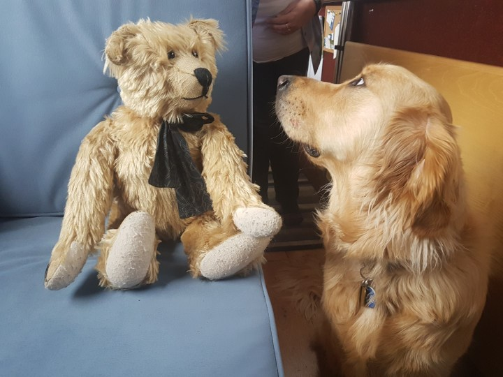 Teddy sitting looking sideways at Bertie the teddybear. Teddy has a quizzical look on his face. Bertie is a traditional type jointed teddybear, pale golden brown in colour, wearing a black scarf around his neck. He is sitting on blue sofa with Teddy beside him.