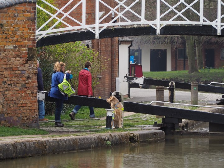 Teddy sitting by lock beam while Mummy is removing her backpack to get her windlass out towork the lock