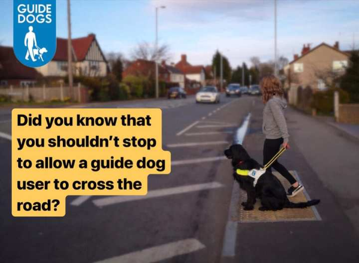 Guide Dogs UK picture poster showing a lady with a black guide dog on harness sitting at a kerb with approaching traffic. The Guide Dogs logo is top left and yellow highlighted text says 'Do you know that you shouldn't stop to allow a guide dog user to cross the road?'