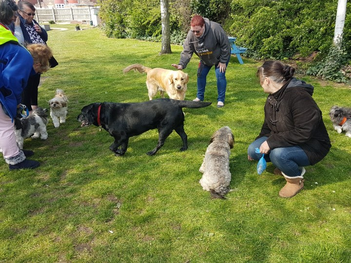 Teddy, Shadow (black lab), Jess (terrier mix), William & FLoss (Shihtzus) and Pippin (chihuahua-poodle puppy) on large expanse of grass with several humans watching and fussing them
