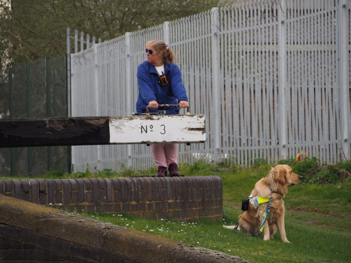 Teddy sitting on grass beside a raised concrete block platform, where Mummy is pulling hard on a lock beam