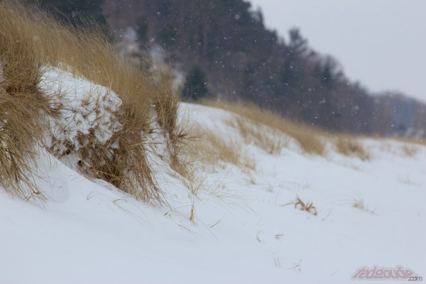 Saugatuck State Park in Winter