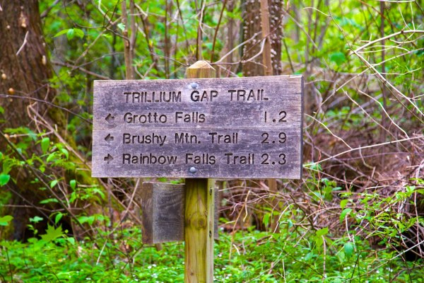 Trillium Gap Trail at GSMNP