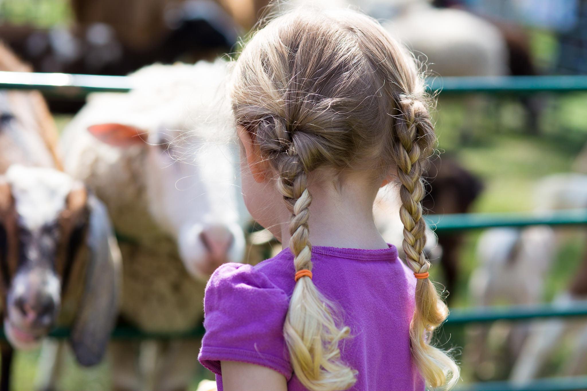 Feeding Goats and Sheep
