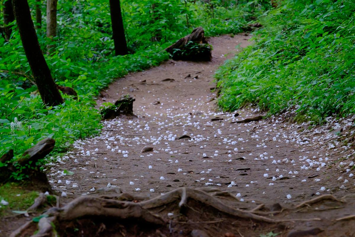 Trillium Gap Trail at GSMNP