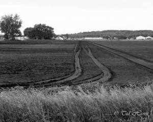 Tire Tracks In The Field