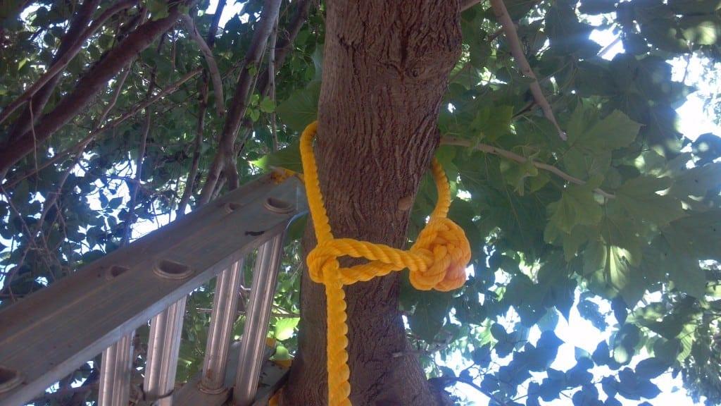 Kids Fall Wallpaper How To Build A One Rope Tree Swing Teediddlydeeteediddlydee