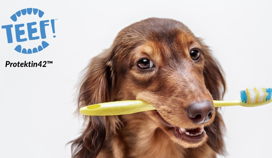 What you can do for your dog's dental health