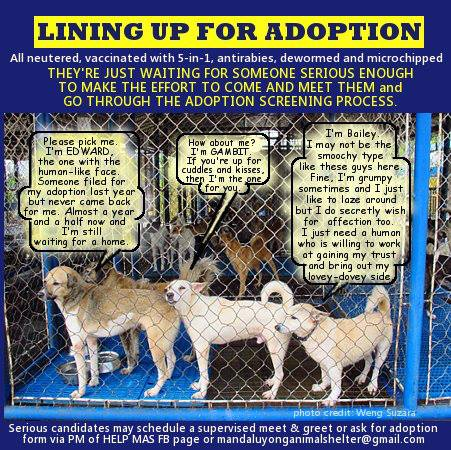 For-Adoption-1