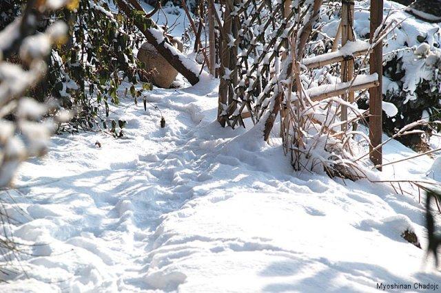 Roji im Schnee
