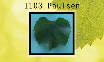 1103 Paulsen