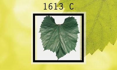 1613 C
