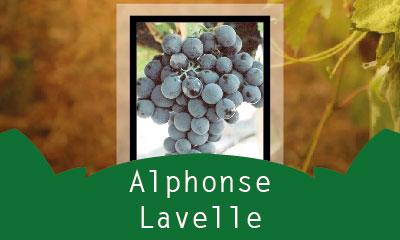 Alphonse Lavelle