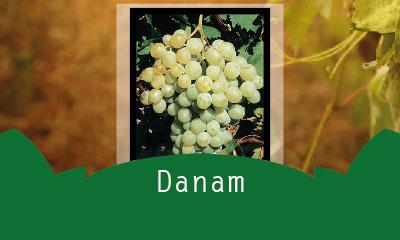 Danam