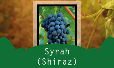 Sirah