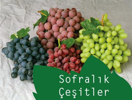sofralik
