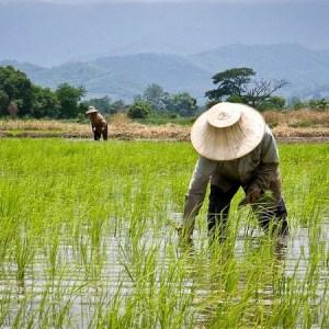 The Algorithms behind Zenvus Smartfarm Commodity Pricing Models for African Farmers