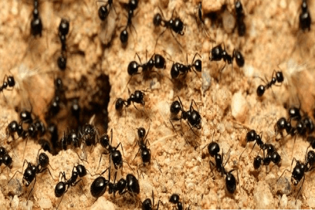 The Business Lessons from Ants
