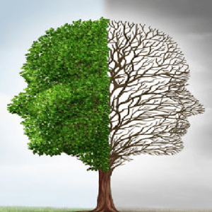 Building Firms That TRANSFORM