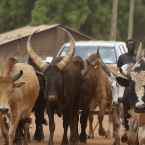 RUGA: The Challenge After The Suspension