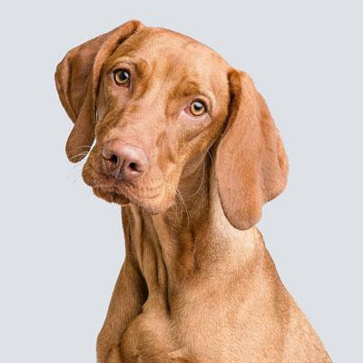 Barkbath Research Team Dog Luca