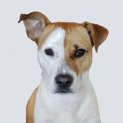 Barkbath Research Team Dog Alto