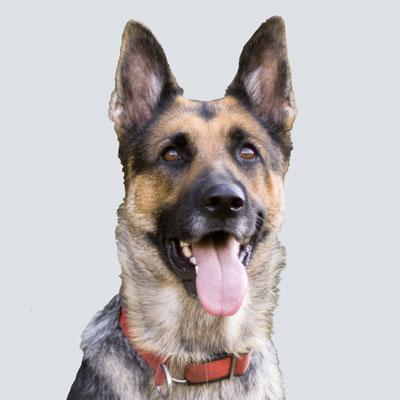 Barkbath Research Team Dog Isaac