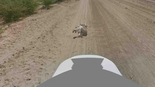 donkey-down