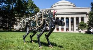 MIT-Cheetah-05-640x366[1]