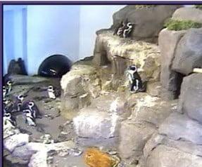 penguincam
