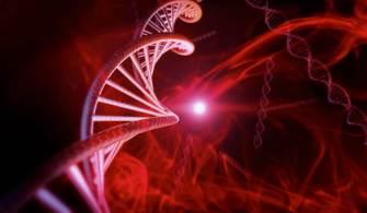 İnsanları Genç Tutan Gen: Kızıl Gen