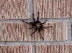Along came a tarantula...