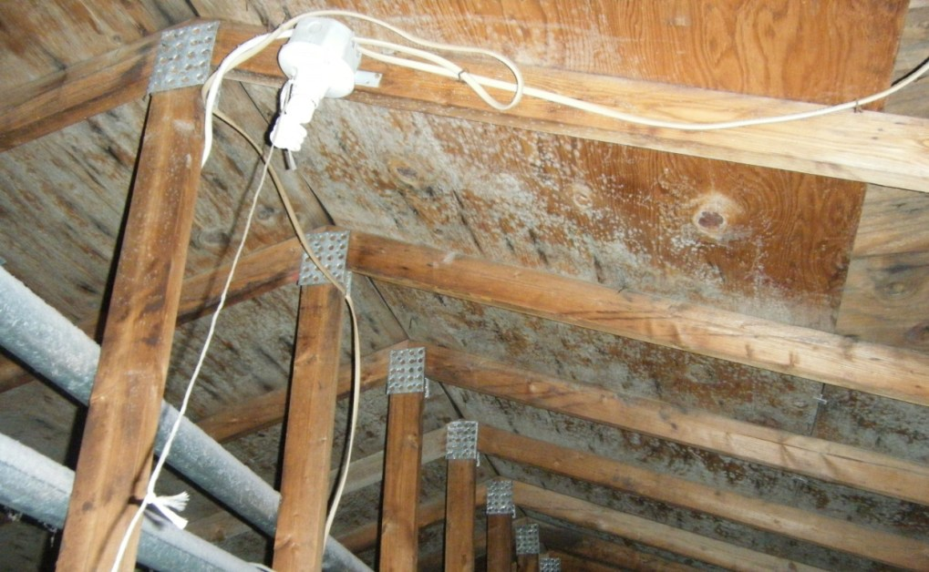 Mold Growth Develop Through Roof Leaks