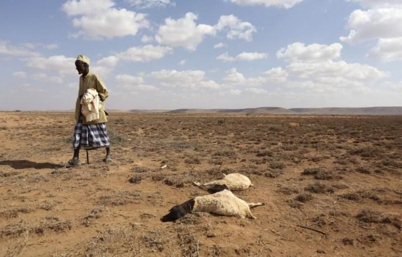 La escasez de agua, la disminución de la producción agrícola y el aumento del nivel del mar son las principales causas que llevan a migrar.