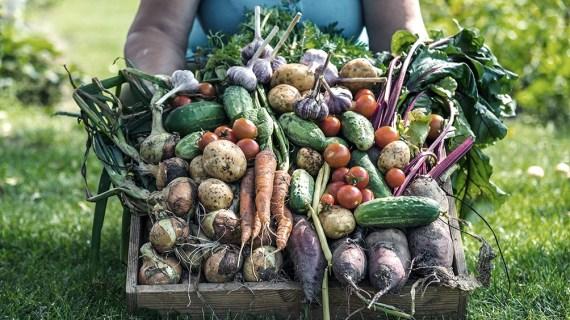 Una alimentación que incluya por lo menos 5 porciones entre frutas y verduras tiene beneficios para la salud.