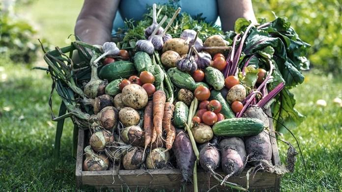 En el primer semestre de 2021 se sumó la zanahoria entre las cinco hortalizas más consumidas en el país, desplazando al zapallito.