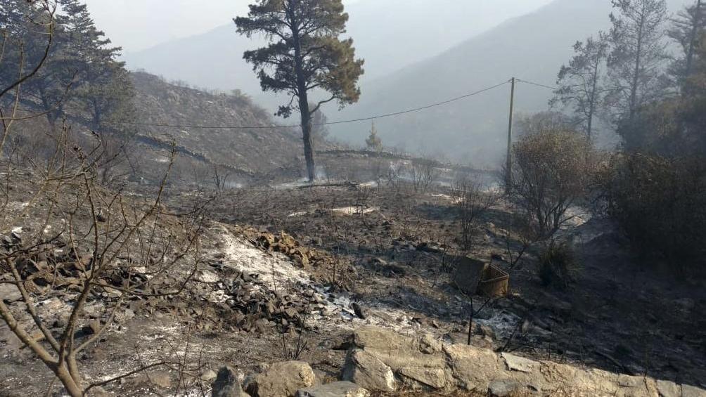 Alrededor de 300.000 hectáreas de pastizales y montes nativos fueron alcanzadas por los incendios desde junio.