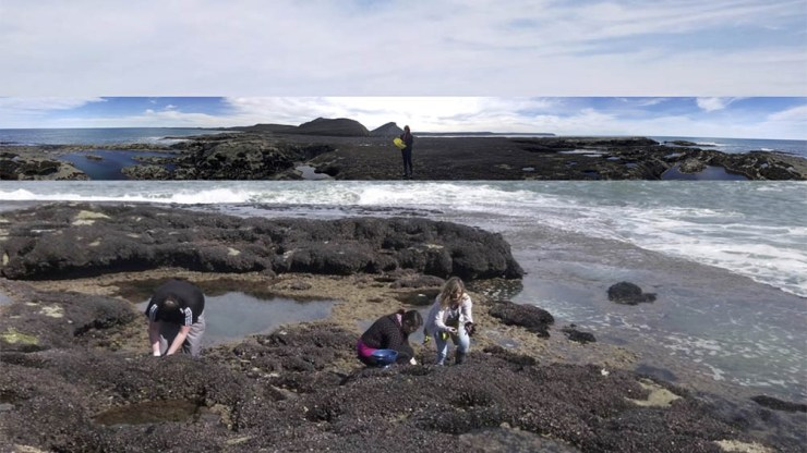 La intención es que la población sepa cómo se fabrican los fideos, qué es el alga y cuántas propiedades tiene.