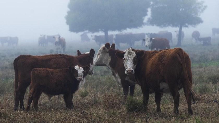 """La medida de limitar las exportaciones de carne vacuna """"no es una decisión rígida sino que está ligada a cómo evolucionen los precios""""."""
